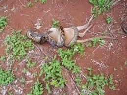 fotos animales cazando - Buscar con Google