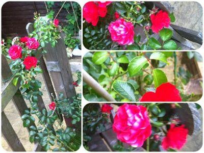 beautiful flowers from my garden: Photos Blog, Gardens, Beautiful Flowers