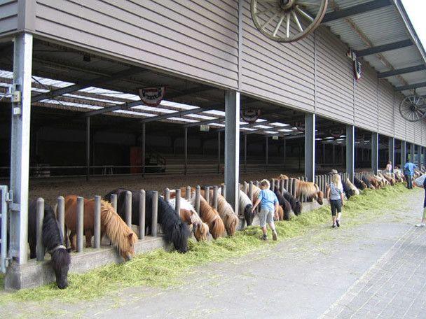 Korting op Ponyparkcity. En bij je huisje in Ponyparkcity staat gratis een Shetland pony tot je beschikking. Ook gratis toegang tot Attractiepark Slagharen!