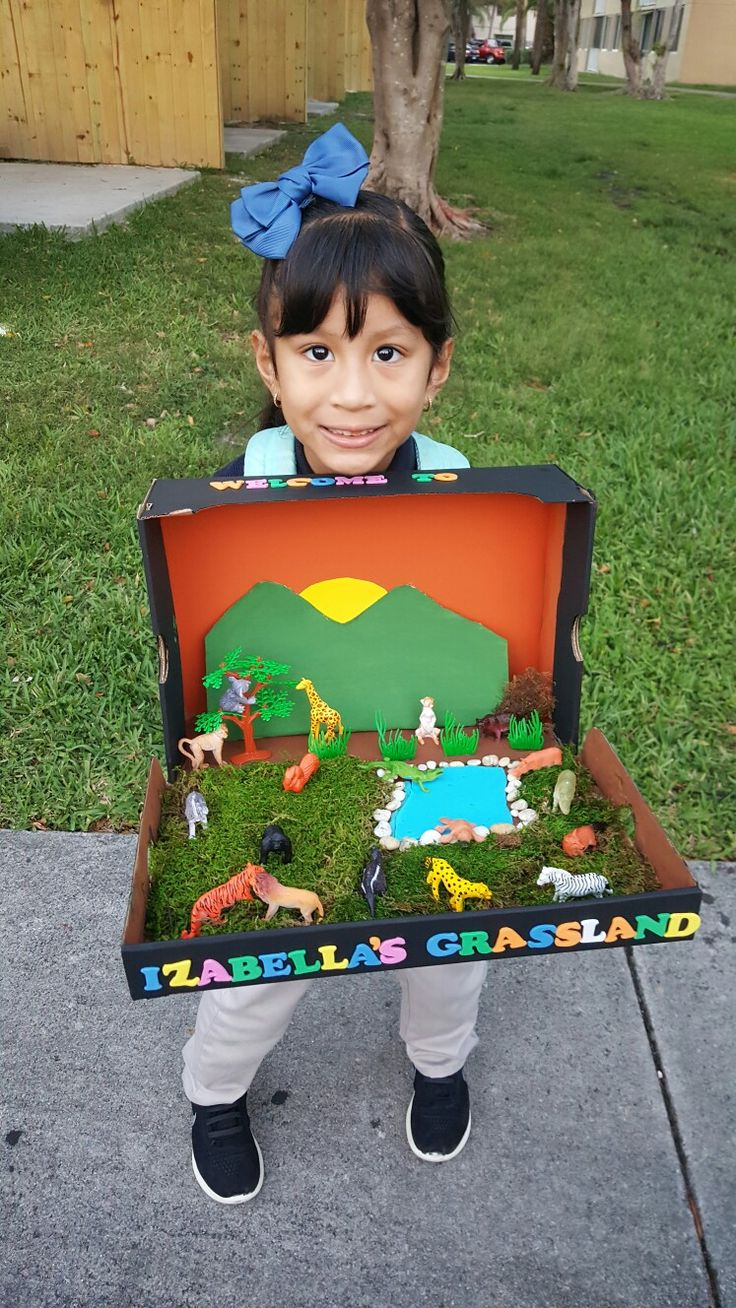 Grassland Diorama Diorama Kids Science Projects For