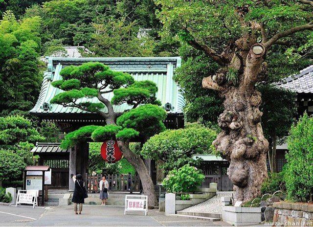 Hasedera Temple Japan