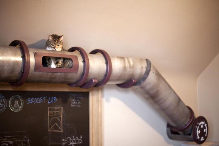 Katzentransitsystem: Eine Rohrleitung quer durch den Raum als Erkundungsmöglichkeit für Katzen via becausewecan.org