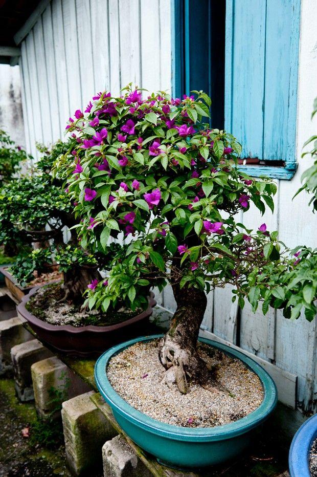26 melhores imagens de jardineira vertical com caixote no - Como cultivar bonsai ...