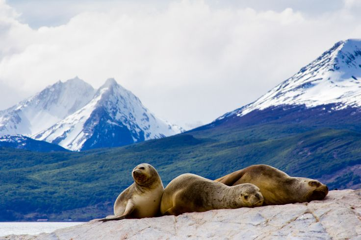 Isla Navarino - Tierra del Fuego - Chile