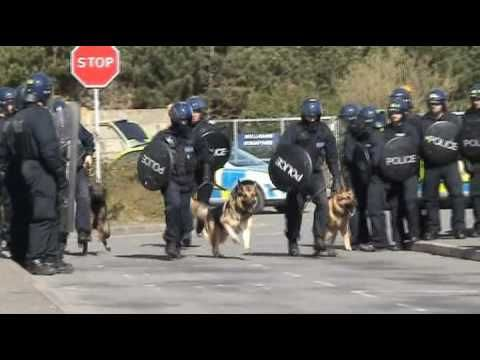 Kent Police Dog Section - YouTube