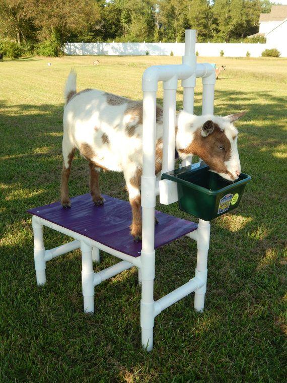 Best 25 Goat Barn Ideas On Pinterest Goat Ideas Goat