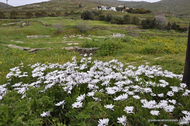 Tinos in the spring | Flickr - Photo Sharing!