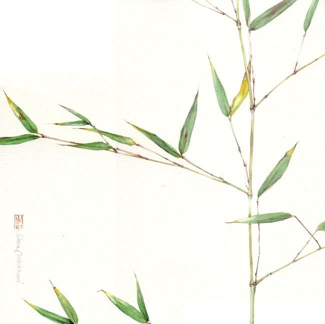 Sihria Molinari  BAMBU. acquerello su carta intelaiata, 30x30 cm, anno 2007