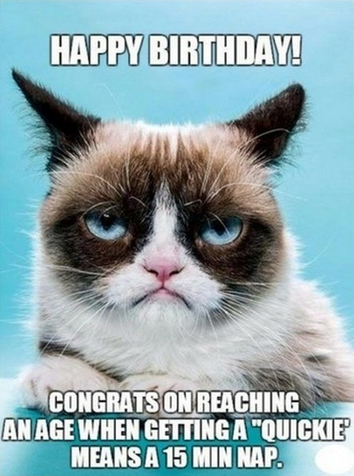 101 Funny Cat Birthday Memes for the Feline Lovers in Your