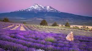 Bildergebnis für beautiful scenery
