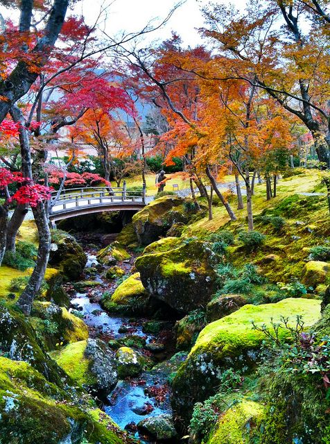 Autumn garden, Hakone Museum, Kanagawa, #Japan
