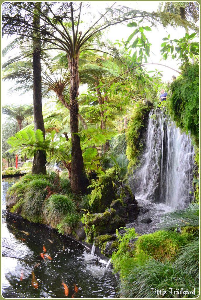 Koipond, Monte, Madeira