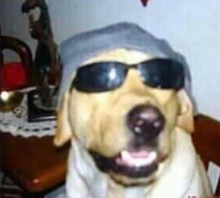 Perro Con Lentes Rayban Wayfarer Mens Sunglasses Square Sunglass