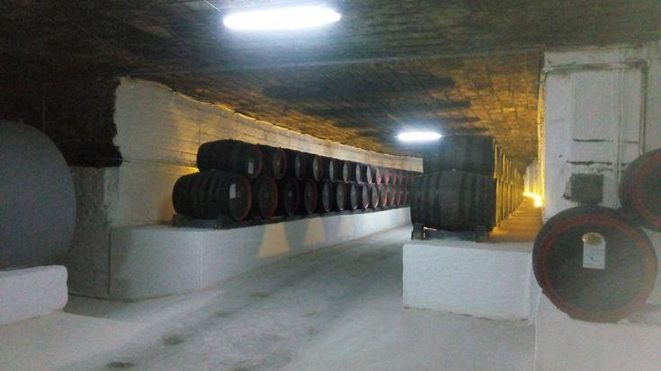 Криковские подвалы-подземное винное царство. Отзыв