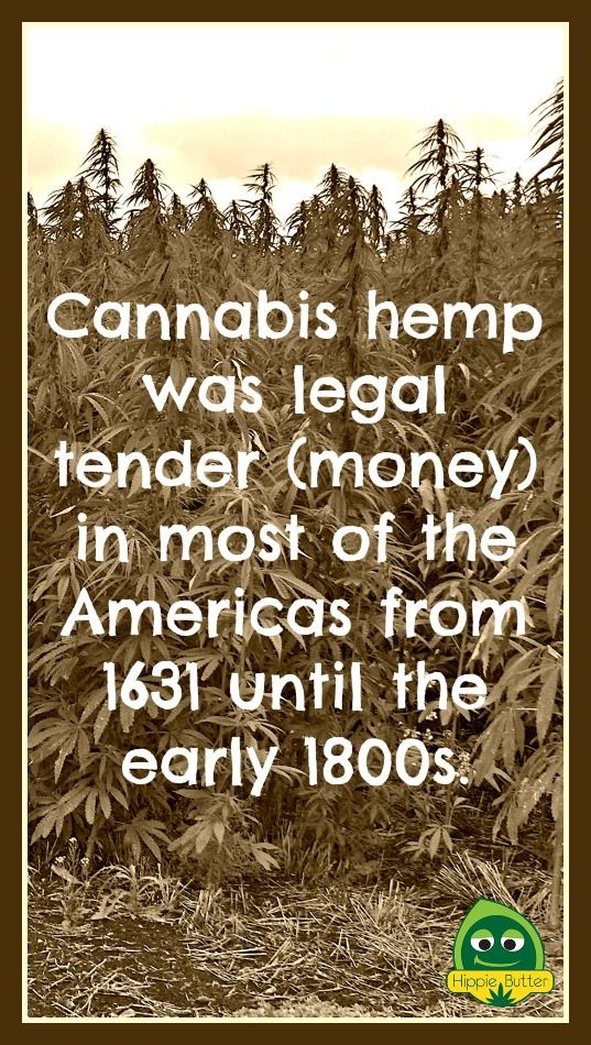 Cannabis hemp was legal tender (money) in most of the Americas from 1631 until the early 1800s. #hemp