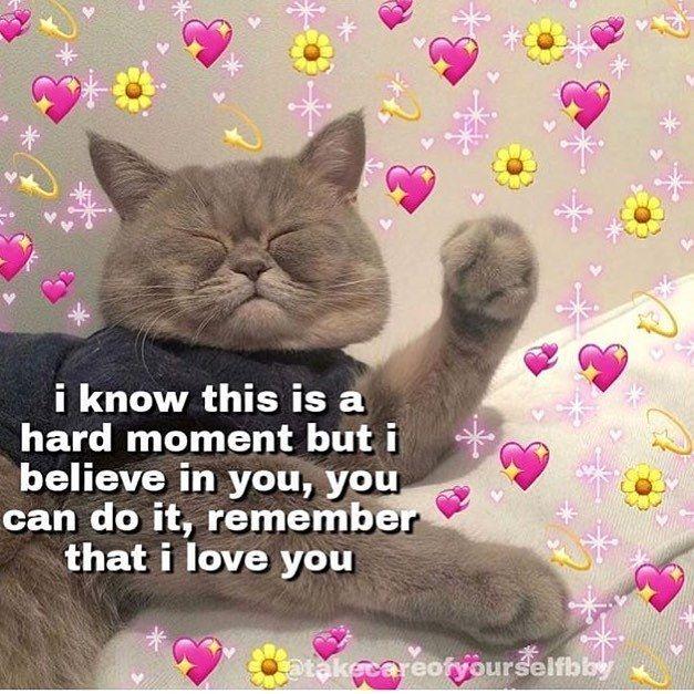 Remember Guys Cute Memes Cute Love Memes Cute Cat Memes