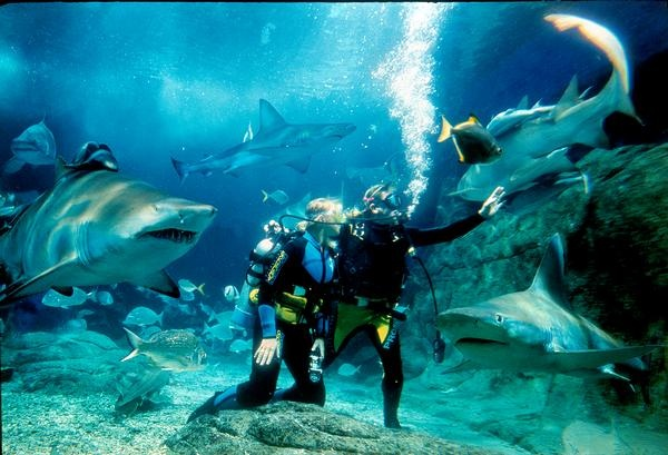 Dive with the Sharks (Non-Certified Diver), Melbourne - VIC