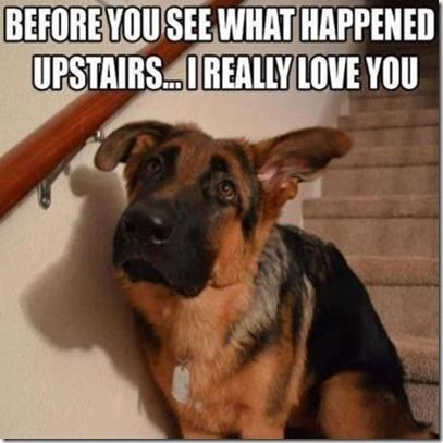 Lol! Our dog looks like this whenever he's done something wrong