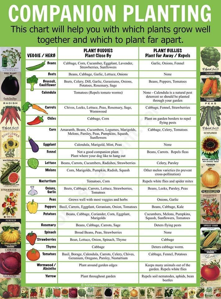 Companion Planting Chart Lots Of Great Info Video Tutorial