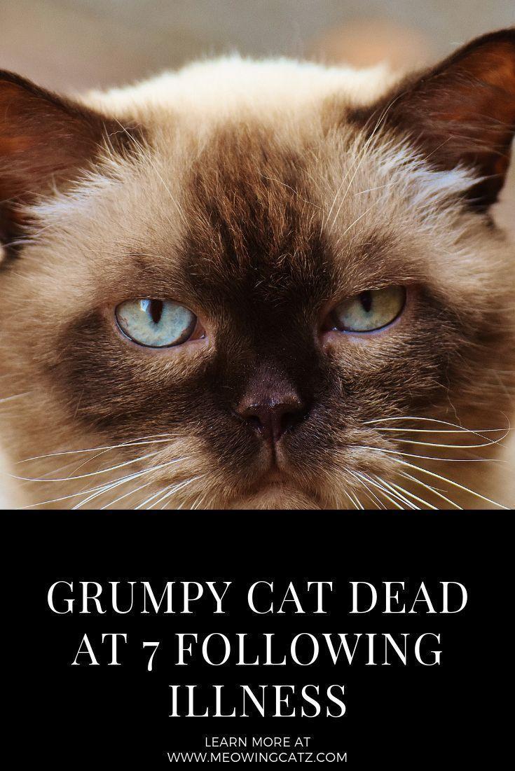 Grumpy cat has died, Viral cat meme sensation dies at age ...