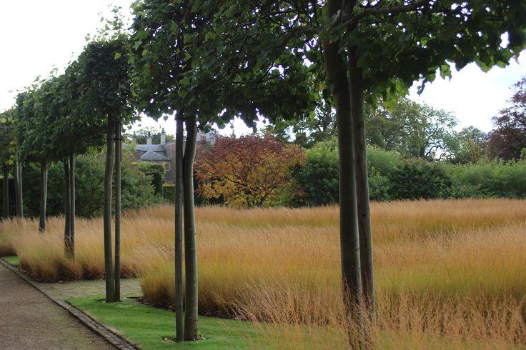 https://flic.kr/p/dpvBwX | IMG_2646 | Scampston Hall Walled Garden in Malton, North Yorkshire, middle of October, designed by Piet Oudolf. Drifts of Grass - Molinia caerulea ssp caerulea 'Poul Peterson'