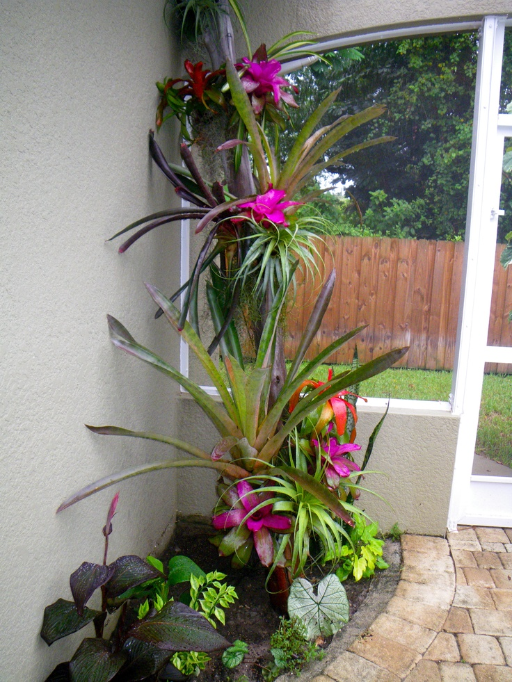 Bromeliad Tree Tropical Poolside Landscaping Tropical