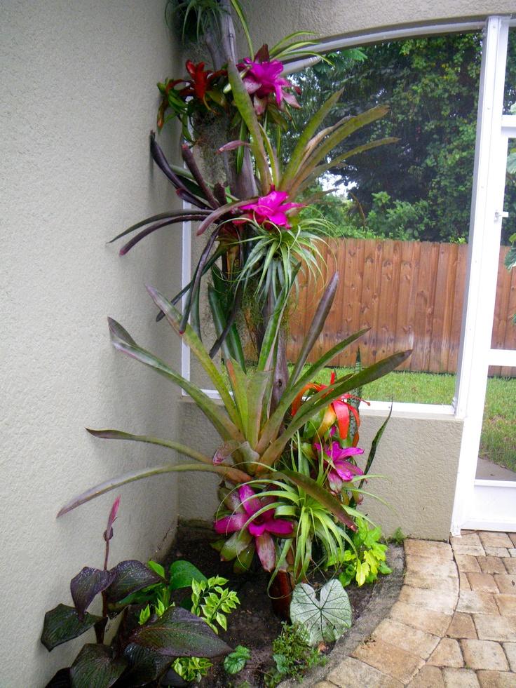 Bromeliad Tree Garden Design Tropical Garden Garden