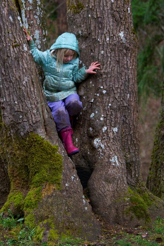 Tree climbing 5-year-old girl navigates a split trunk