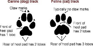 cat paw print vs dog paw print - Google Search