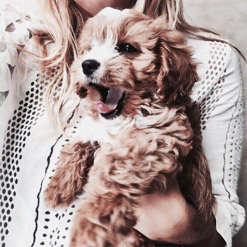 cute, animals, puppies,