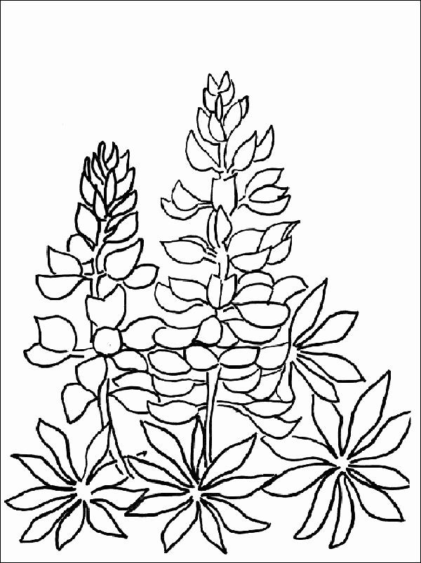 32 Paul S First Missionary Journey Coloring Page In 2020 Flower