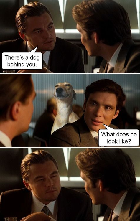 leonardo dicaprio theres a dog behind you | There's a dog behind you. What does it look like?