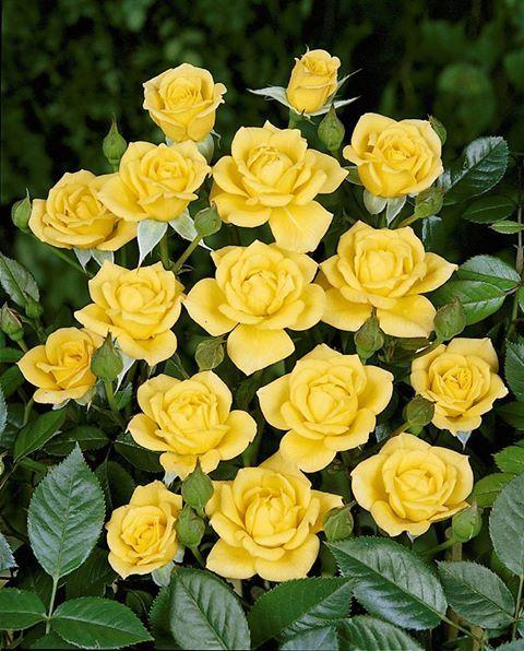 Hayırlı geceler güzel güller.