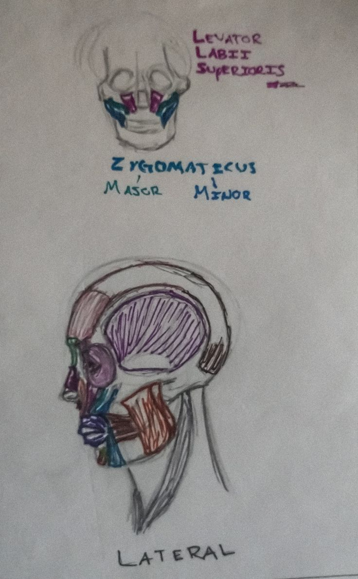 I drew this in Drawing Anatomy based on the head muscles