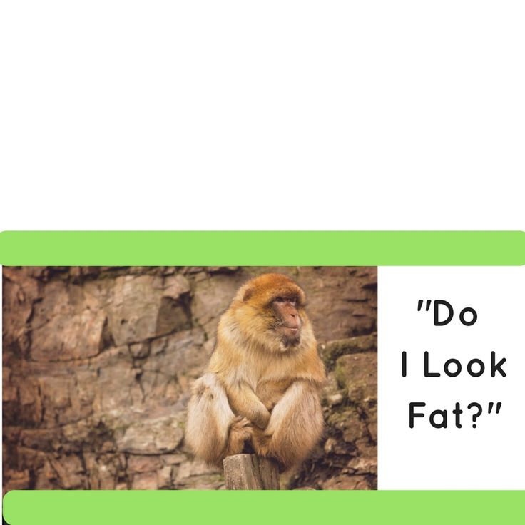"""Do I look Fat?"" http://jennyedencoaching.com/look-fat-ill-never-say-4-words?utm_campaign=coschedule&utm_source=pinterest&utm_medium=Jenny%20Eden%20Coaching%20%2FBody%20Image%20%2F%20Eating%20Psychology%20Coach&utm_content=%22Do%20I%20look%20Fat%3F%22 Why I'll never say these 4 words again."