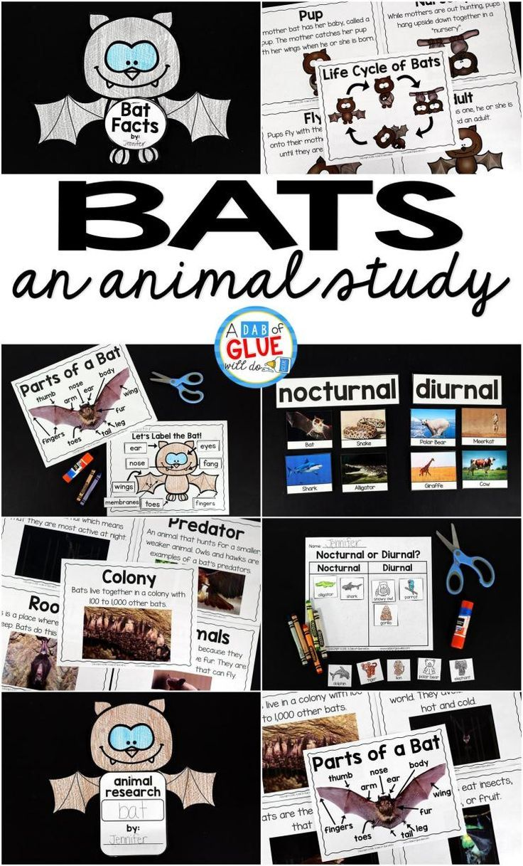 Engage your class in an exciting hands-on experience learning all about bats! This Bats: An Animal Study is perfect for science in Preschool, Pre-K, Kindergarten, First Grade, and Second Grade classrooms and packed full of inviting science activities.  Students will learn about the difference between bats and birds, nocurtnal and dirunal animals, parts of a bat, and a bat's life cycle. When students are done they can complete a bat research project. This pack is great for homeschoolers, kids