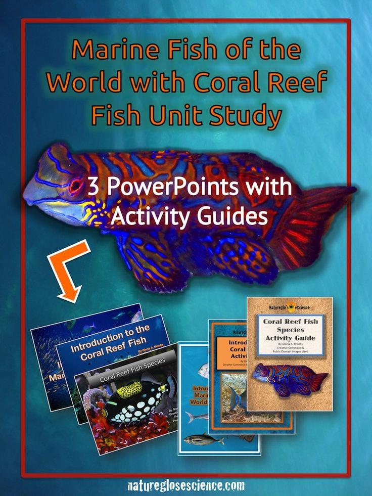 1000  ideas about ocean lesson plans on pinterest
