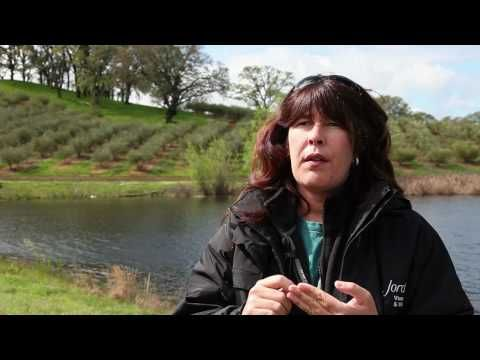 ▶ Pruning olive trees and reusing cuttings (The Journey Blog 3.31.10) - YouTube