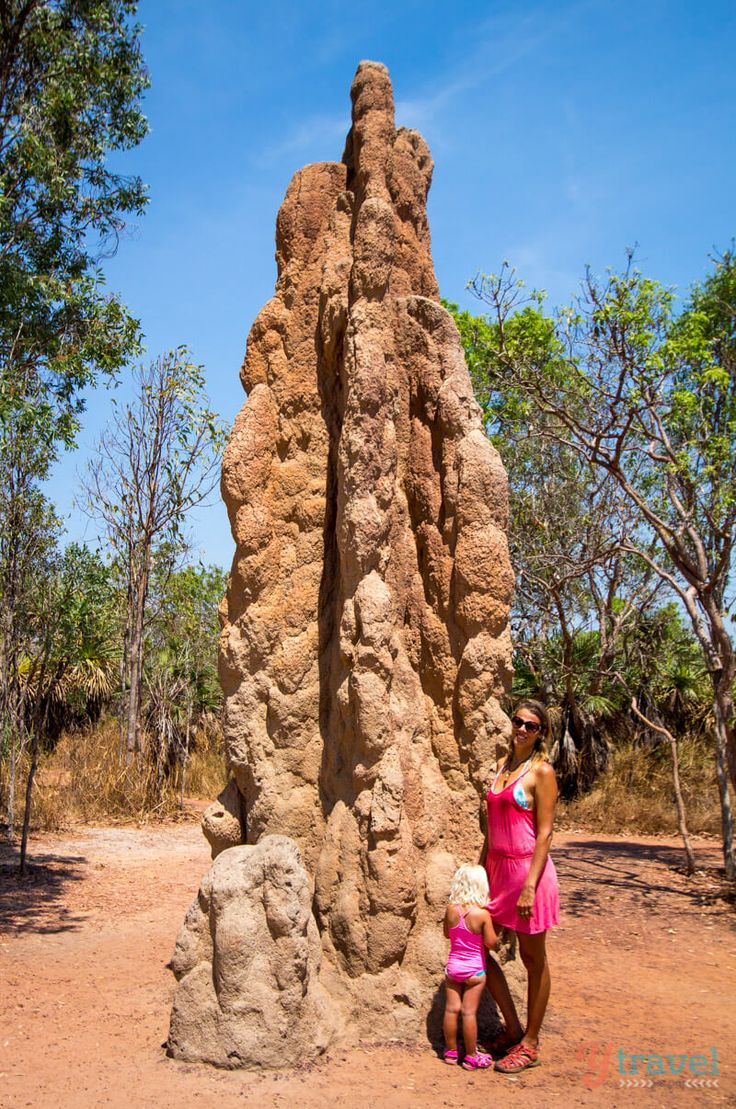 See the giant termite mounds in Litchfield National Park, Northern Territory of Australia More