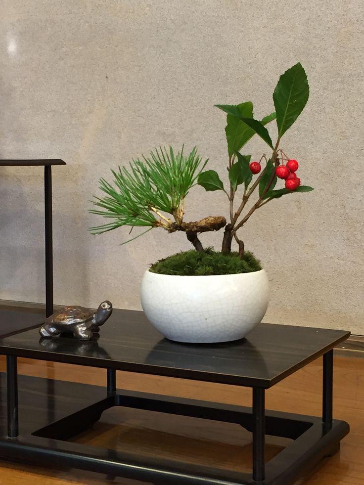 My first Bonsai!