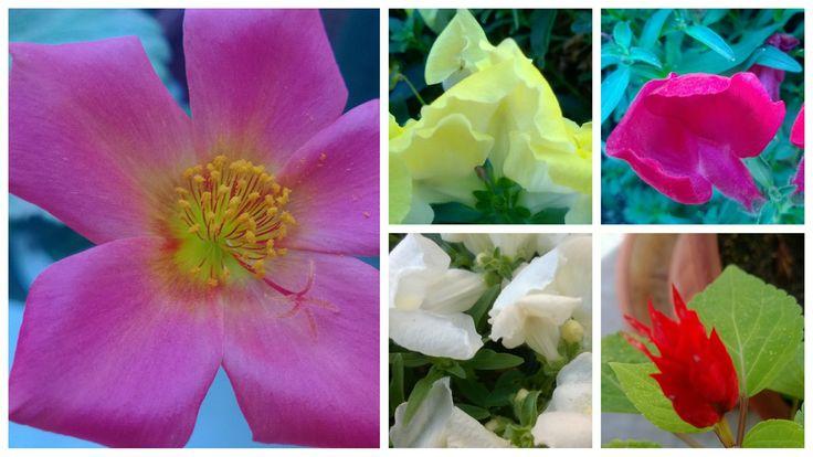 """Φθινοπωρινό """"μπουκέτο"""" από σημερινές φωτογραφίες."""