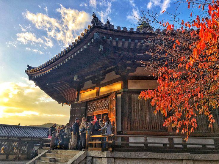 . 冷爆我🌬🌬🌬寒すぎる!!! 10度以下我真的沒法啦😭😭😭 . 才一個多月去過的展覽博物館美術館古蹟們就比我這10年加起來還要多...... 看來我好像是個沒什麼文化細胞的人🤦🏻♀️ . #奈良#法隆寺#夢殿#東院伽藍 #日本文化遺産 #紅葉#🍁#maple #horyuji #dreamhall #nara#japan