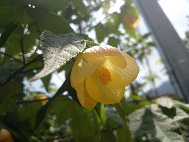 #Flower #flor