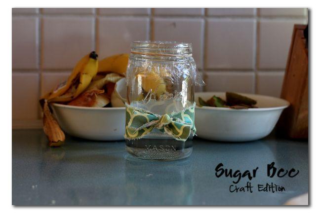 Gnat (fruit fly) Catcher - Sugar Bee Crafts