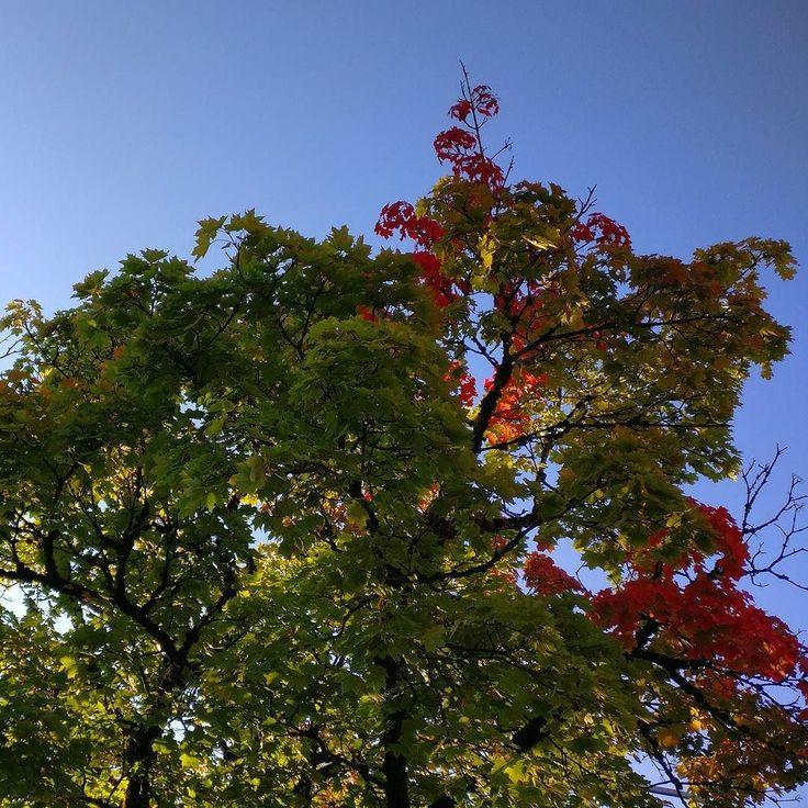 it's time. . #natureknowsbest#deinbayern #instanature #germany #igersmunich #tree #autumn #jesień #fall #otoño