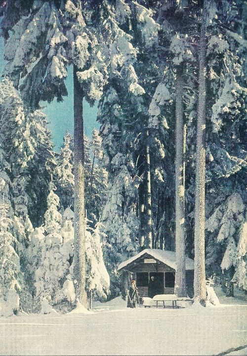 vintagenatgeographic: Black Forest firs covered in frost and snow  National Geographic   December 1928