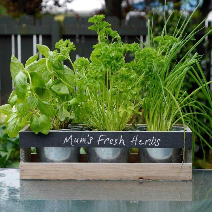 Top And Wonderful Indoor Herb Garden Ideas