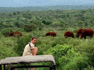 Elephant adventure in the Pongola Game Reserve on Jozini Dam, KZN.
