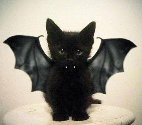 Pretty cute - baby kitty bat bat.