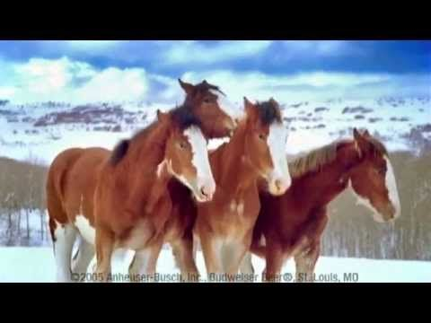 Clydesdale Horses Snowball Fight | These Clydesdales just love horsing around. Here's them having a good old snowball fight. http://1funny.com/clydesdale-horses-snowball-fight/#PDB4c9EWRDT6uALD.99 -  1Funny.com